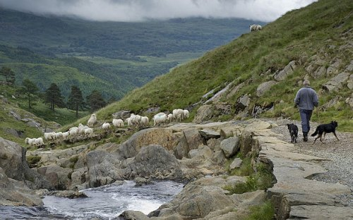 shepherding_3282255b