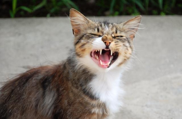 cats-meow-main